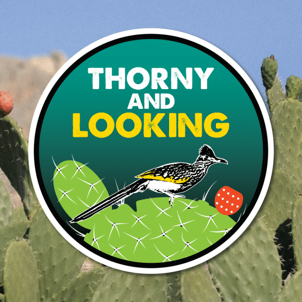 D. Goone - Thorny and Looking